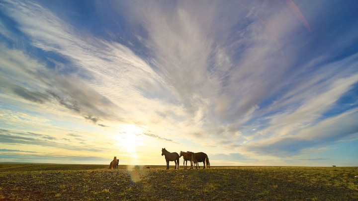 7D Mongolia Gobi Desert Photo Tour